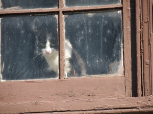 Wanda the cat.  (NOT at bird feeder.)